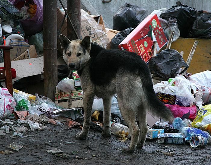мусорка 2