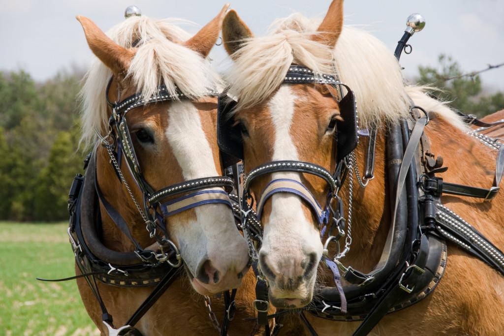 москва элитные конные клубы
