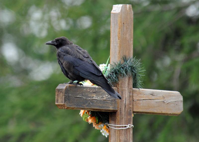 Как эффективнее использовать саратовские кладбища, решат чиновники, священники и Александр Ландо