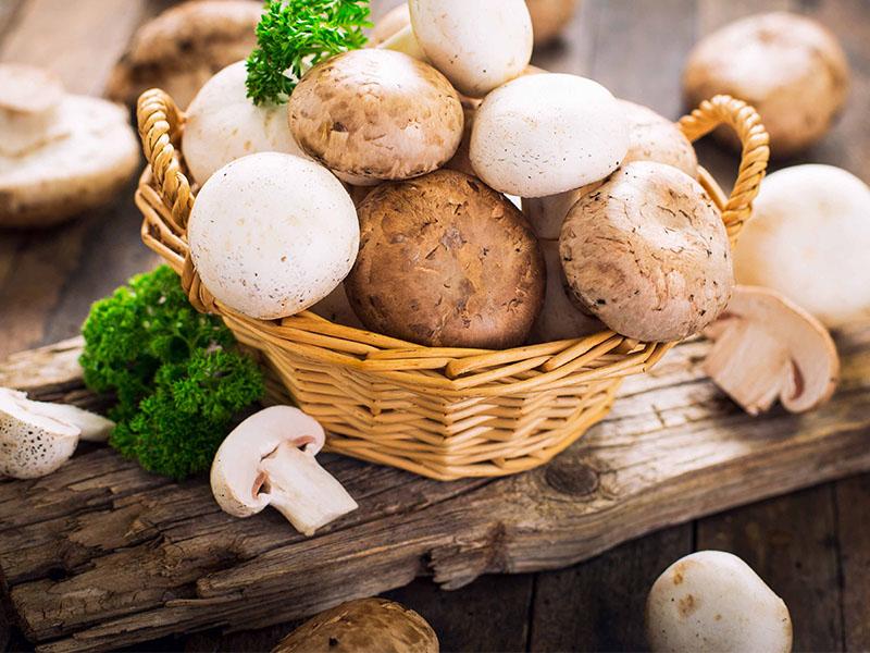 В ТОСЭР «Петровск» в Саратовской области будут выращивать биошампиньоны