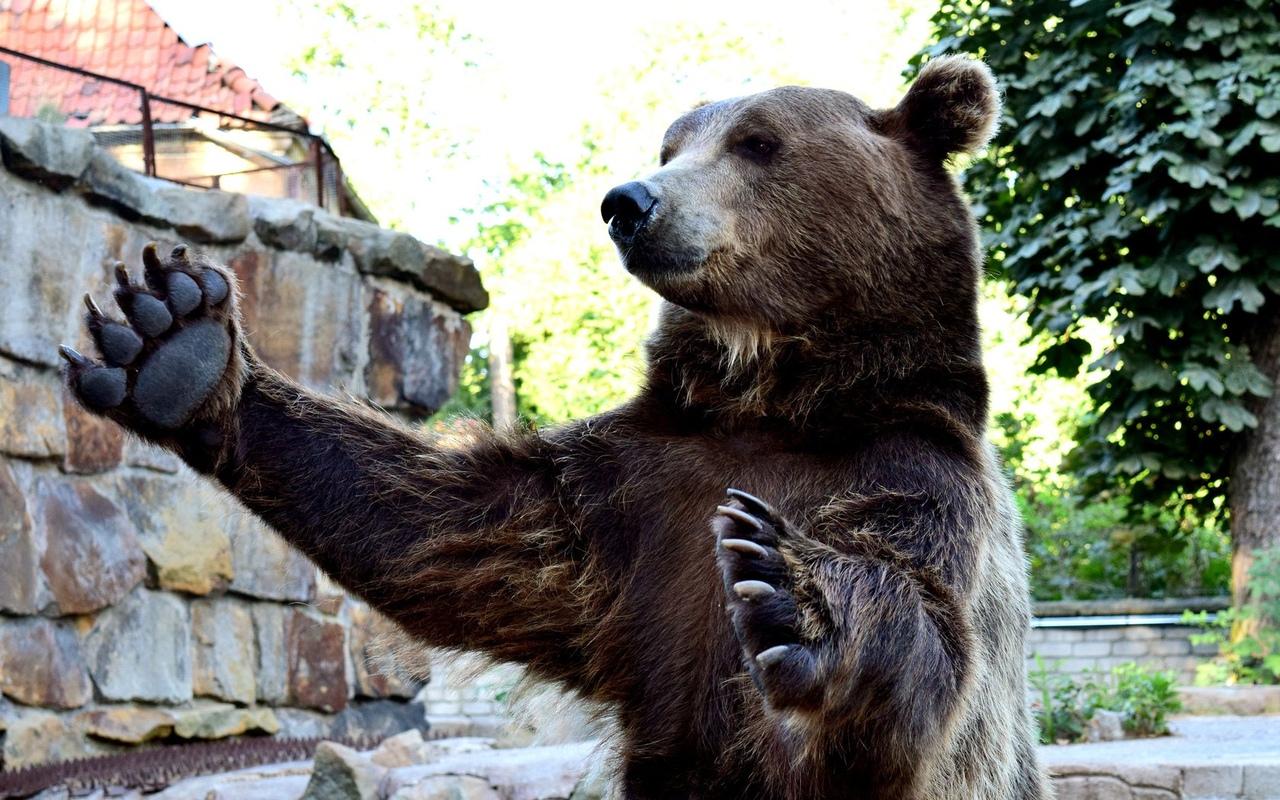 Медведь 1 увл