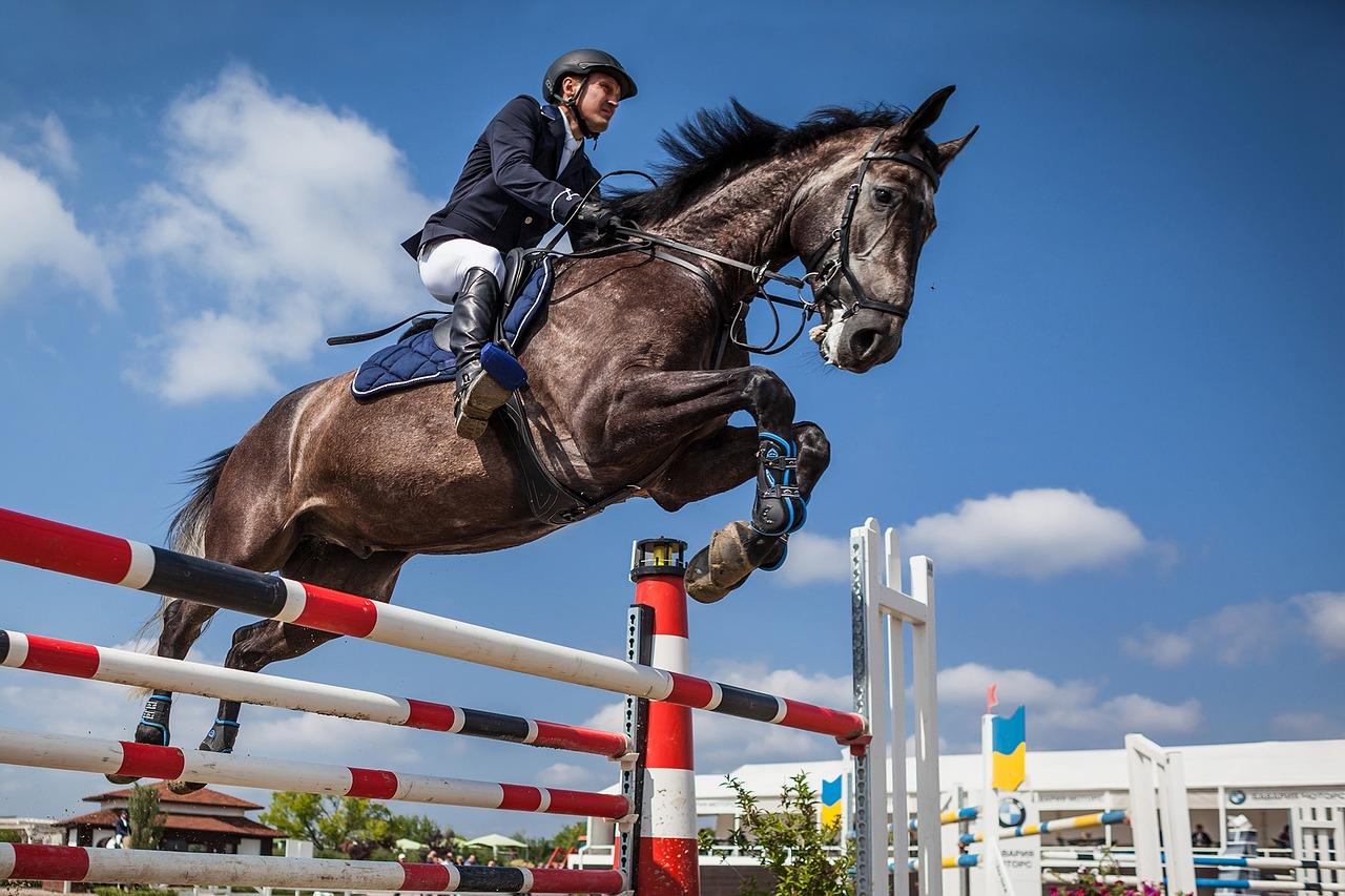horse-2944967_1280