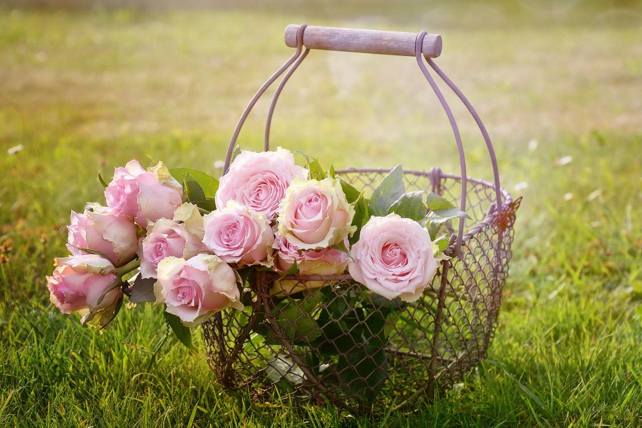 roses-1566792_1280
