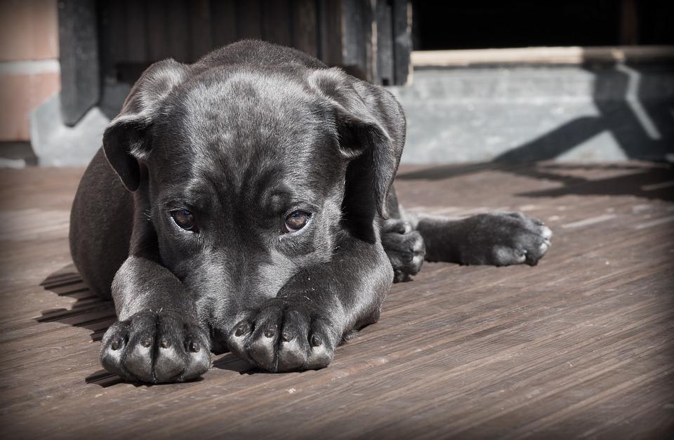 Собак заточили в квартирах: чтобы погулять с ними, балаковцам и саратовцам придется ехать много километров