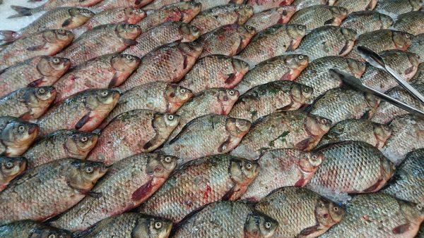 fish-3787254_960_720