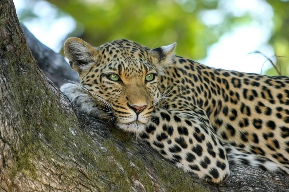 «Барсук», который мог бы стать «леопардом»: если оживятся аграрии, саратовская экономика сможет восстановиться за два года
