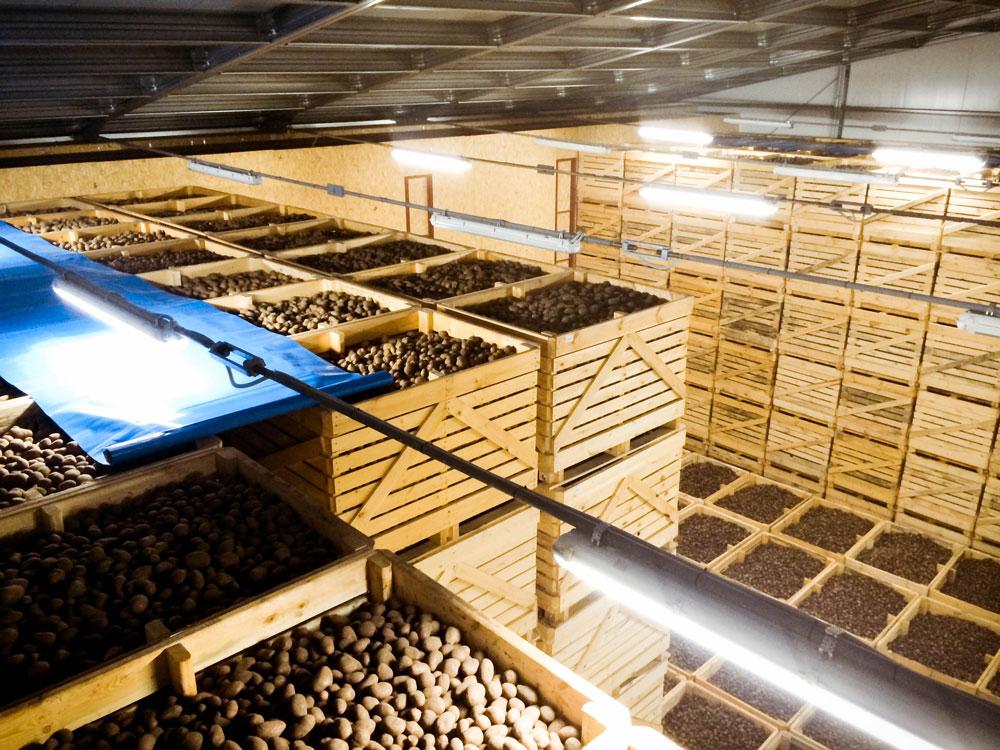 Волгоградские оптовики вложат 100 млн рублей в овощехранилище в Энгельсе, но местного картофеля им не хватит